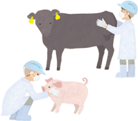 About meat distribution ③Biopsies or inspections carried out before butchering
